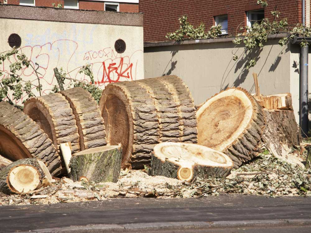 (Groß-) Baumfällungen, auch im beengten Stadtbereich, erledigen wir mühelos