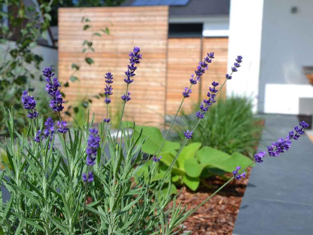 Strukturreiche Bepflanzungen ergänzen eine moderne Gartengestaltung  perfekt