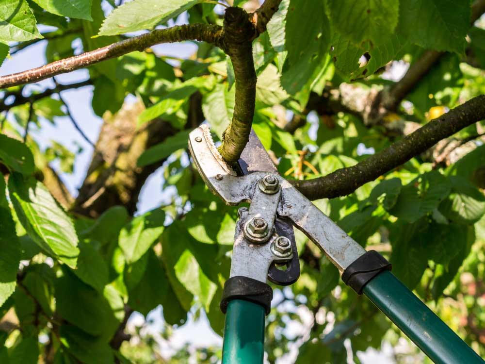 Fachgerechter Gehölzschnitt in privaten und gewerblichen Gärten