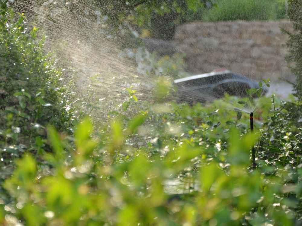 Standortangepasste Lösungen halten Ihren Garten vital – auch in trockenen Zeiten!